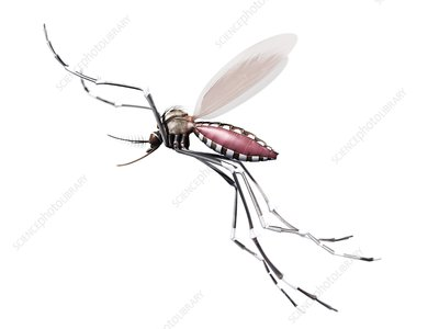 Flying mosquito, artwork