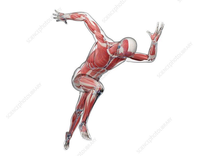 Sprinter, artwork