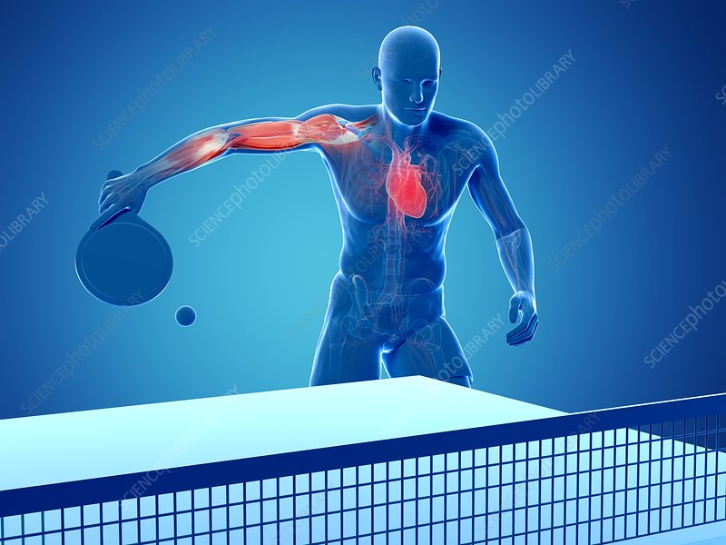 Table tennis player, artwork