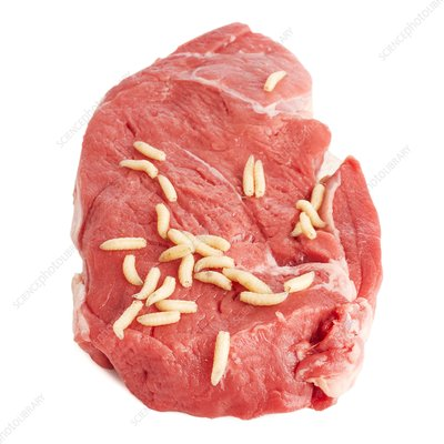 Maggots on meat