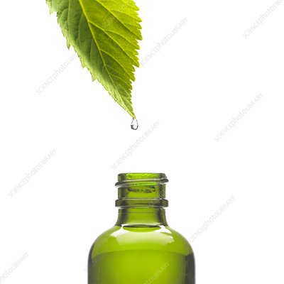 Herbal tincture, conceptual image