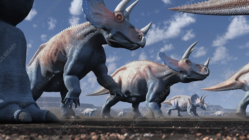 Artwork of a herd of triceratops
