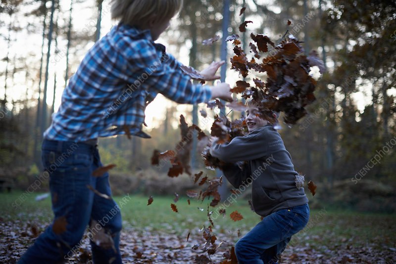 Boys throwing leaves at each other