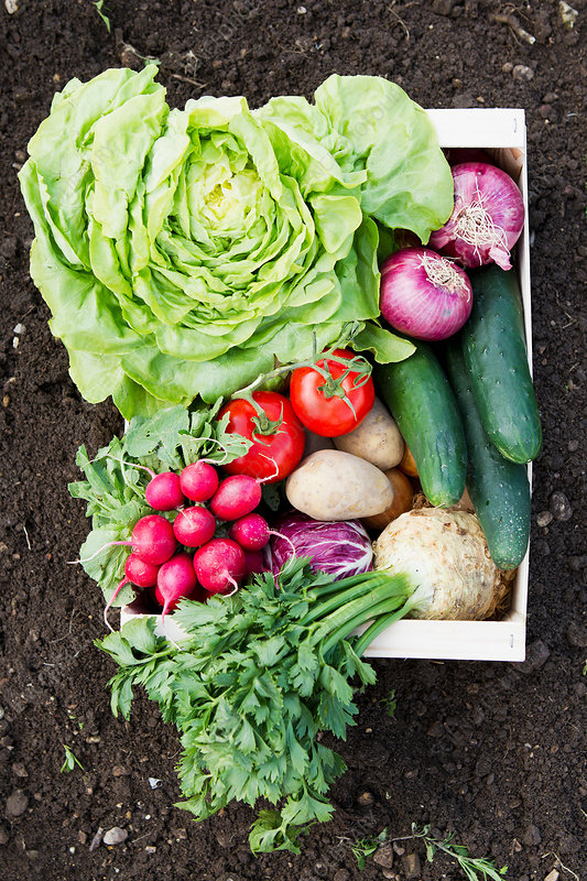 Box of fresh vegetables in allotment