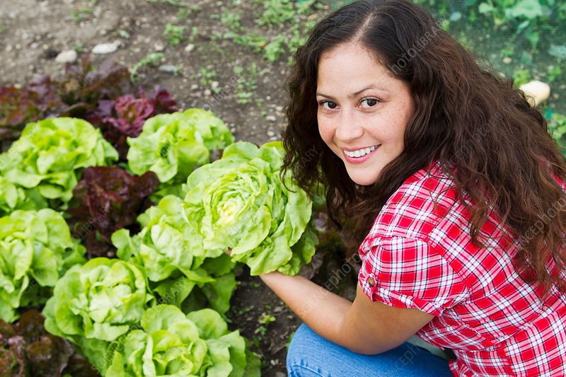 Woman holding cabbage in allotment