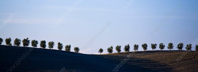 Ploughed fields and cypress trees, Italy