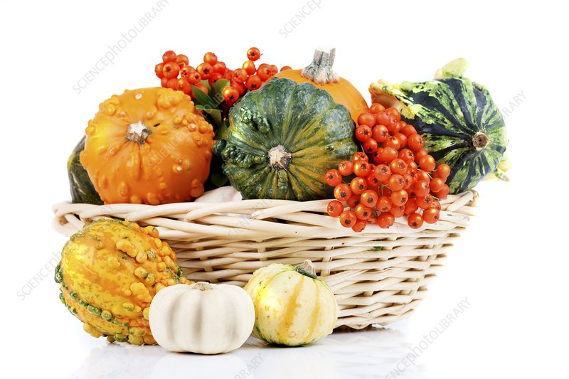 Basket of squashes