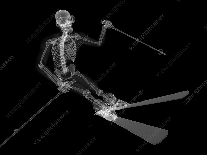 Skeleton skiing, artwork