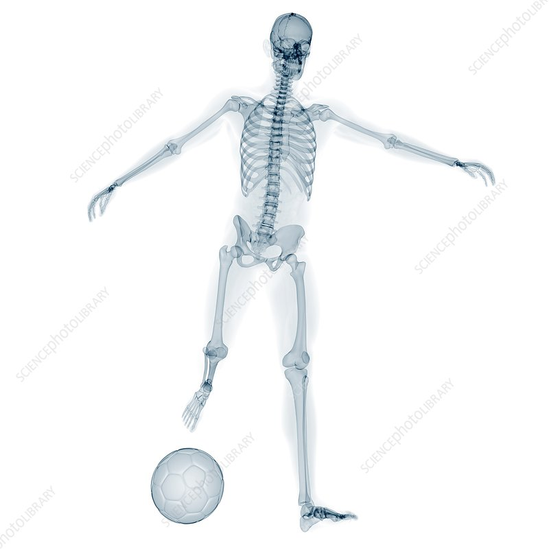 Skeleton playing football, artwork