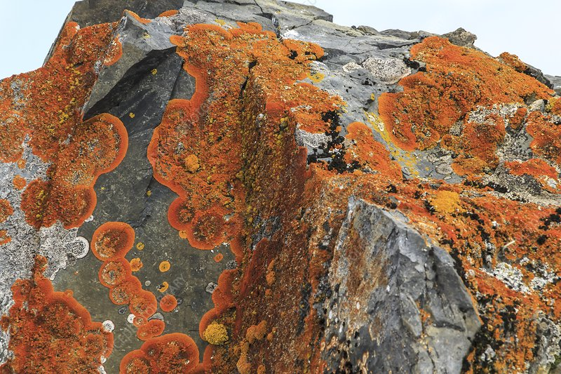 Lichen-covered cliffs, Antarctica
