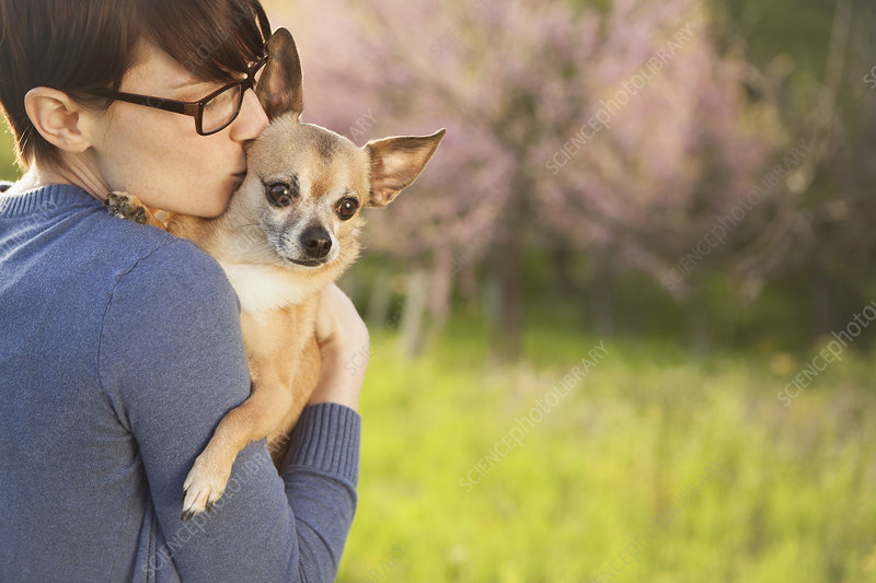 Woman with a small pet chihuahua dog