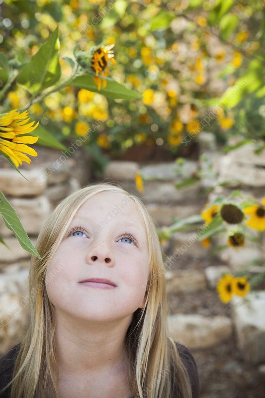 Girl looking up at a sunflower