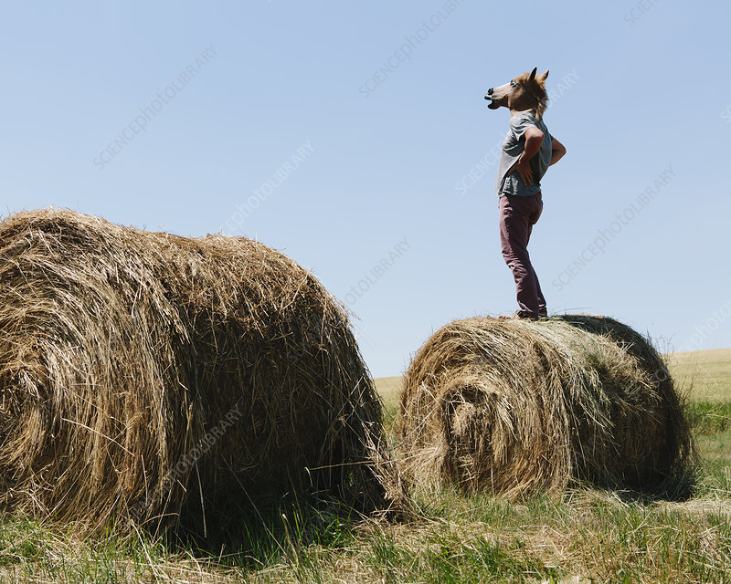 Man with Horse mask on Hay bale