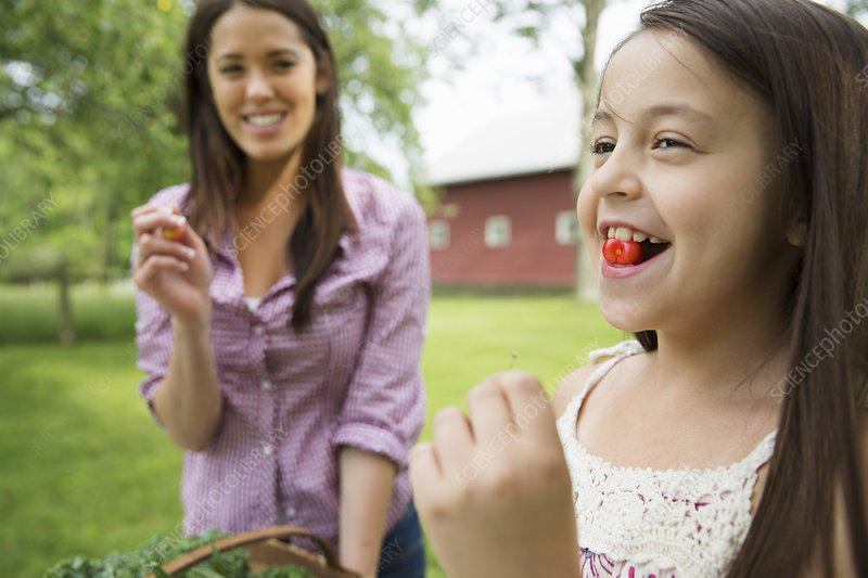Child with fresh cherry in her mouth