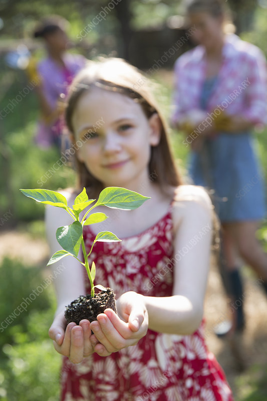 Child holding a seedling plant