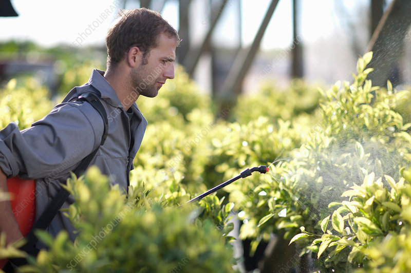Young man spraying pesticide in nursery