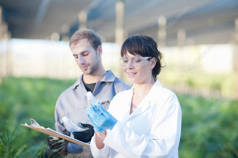 Scientist and worker in plant nursery