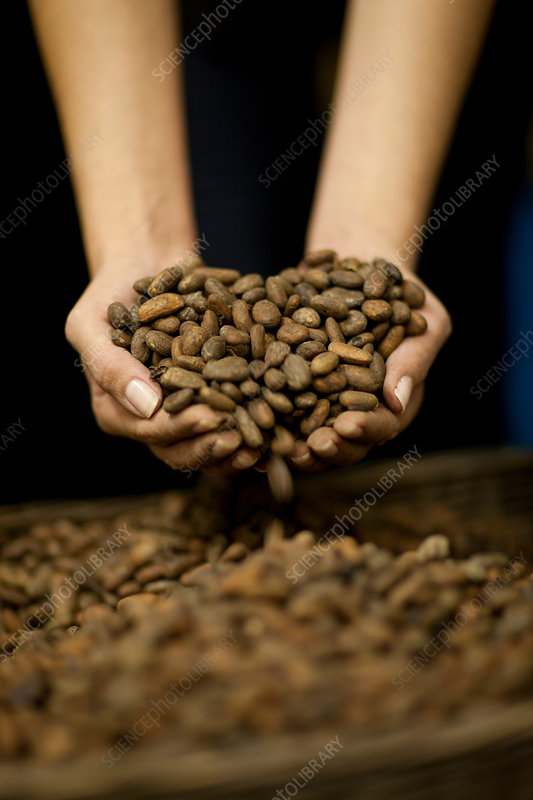 Cupped hands with handful of cocoa beans