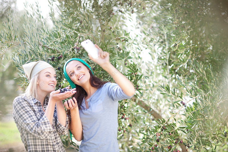 Women taking photos in olive grove