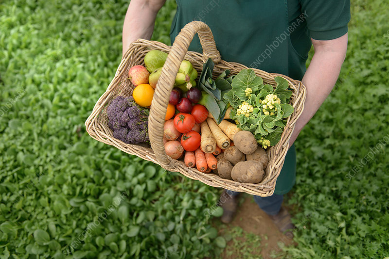 Farmer carrying vegetables in basket