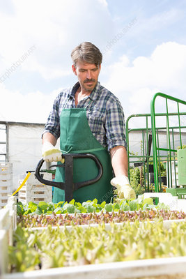 Organic farmer with trays of seedlings
