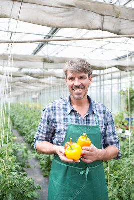 Organic farmer holding yellow peppers