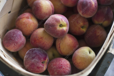 A crate of organic peaches fruits