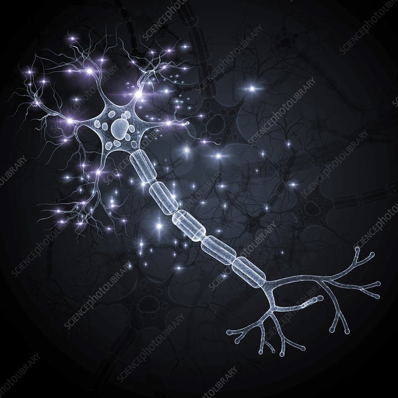 Nerve cell, artwork