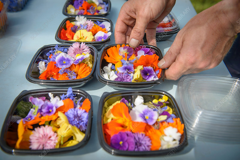 Preparing and packing edible flowers