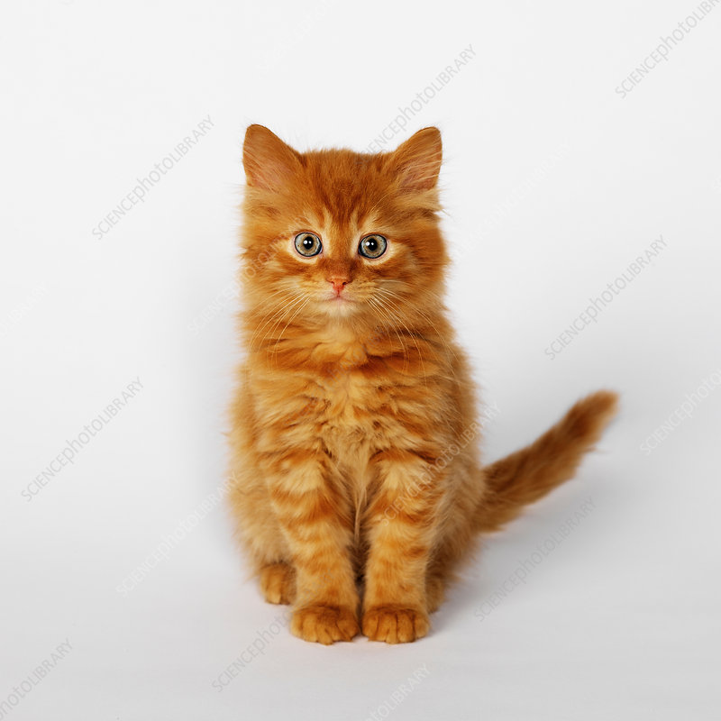 Portrait of ginger kitten