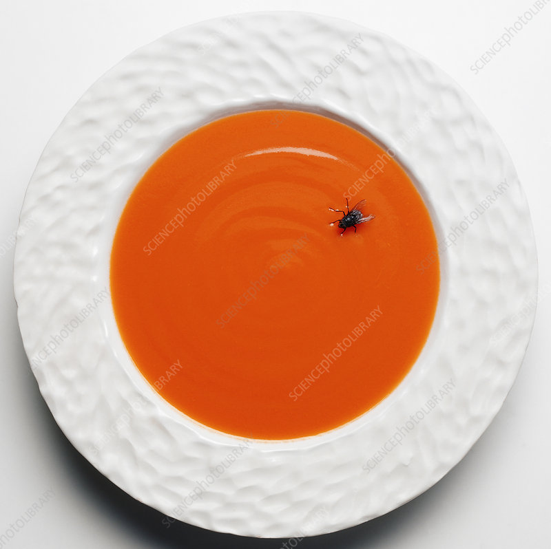 Fly in tomato soup