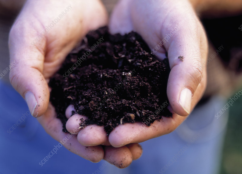 Handful of rich compost