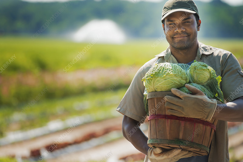 A man with a basket of vegetables