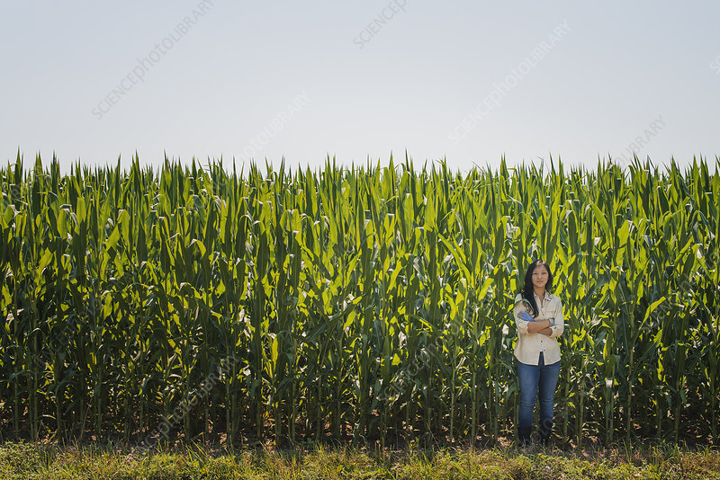 Woman by a tall maize crop