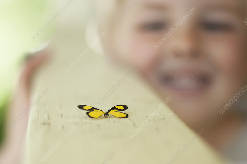 A child examining a butterfly