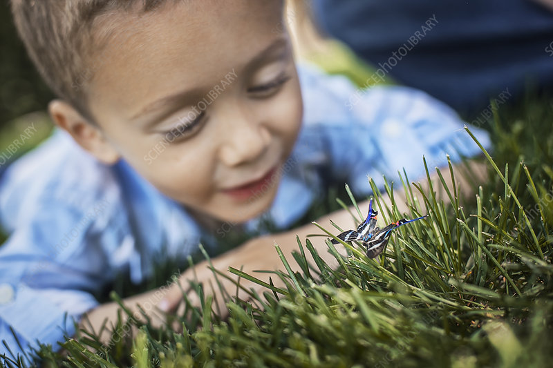 A boy examining a butterfly