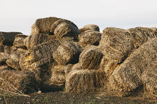 Straw bales in a heap