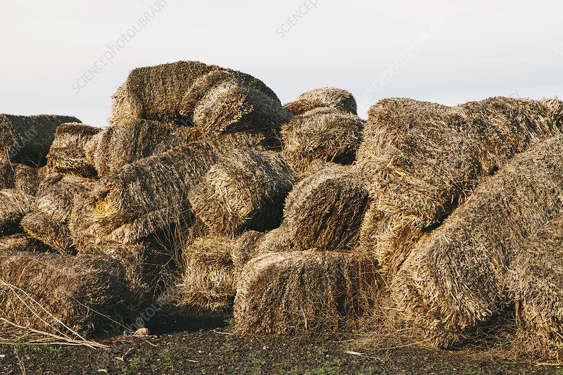 Straw bales in a heap