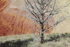 Bare tree in a volcanic landscape