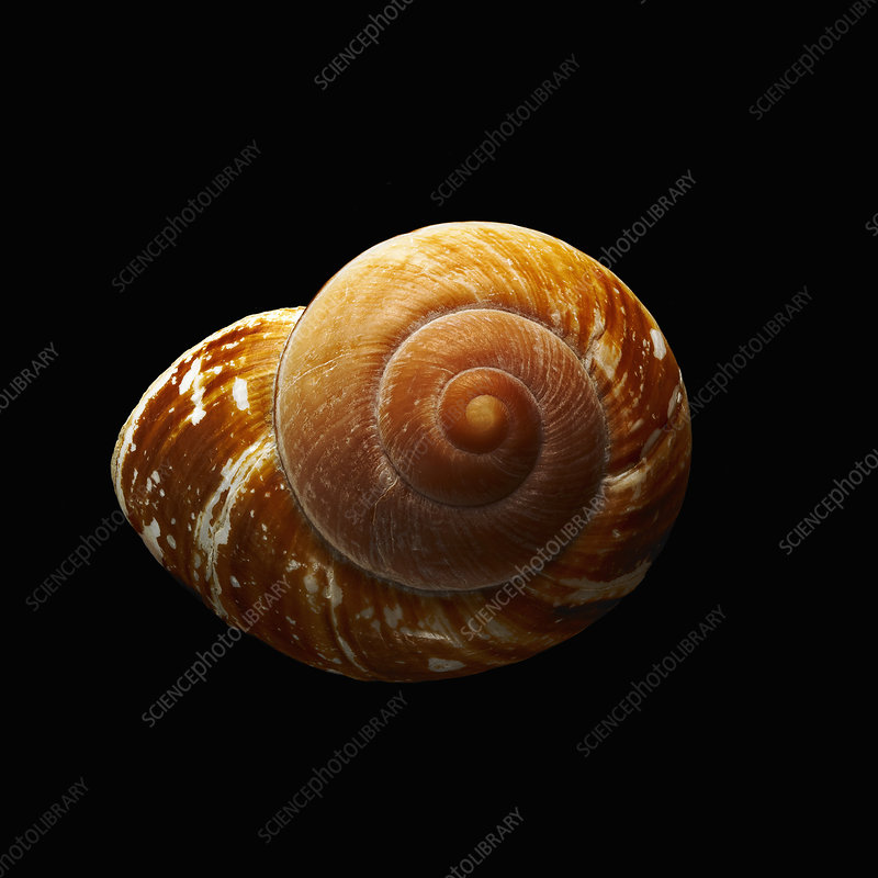 Spiral patterned shell