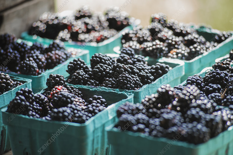 Organic Blackberries at Market