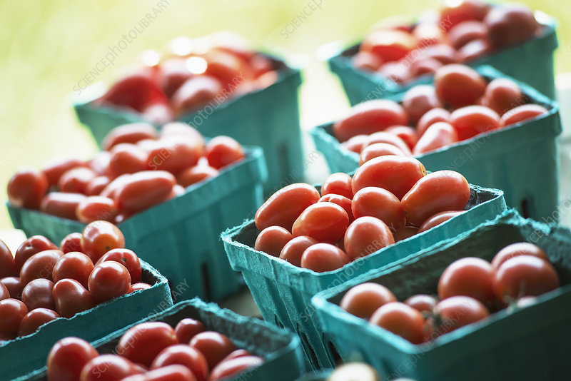 Organic Red Cherry Tomatoes at Market