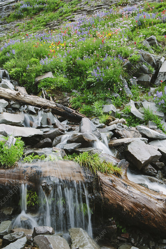 Cascading waterfall and wildflowers