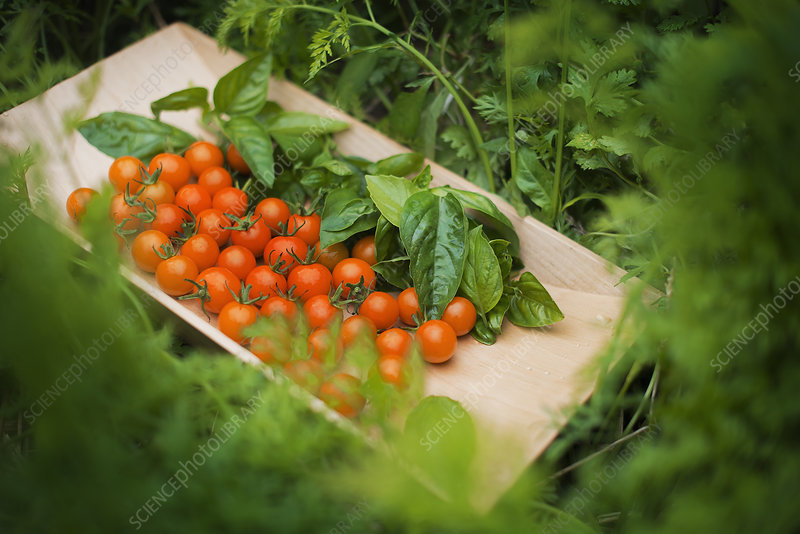 Tray of organic vegetables