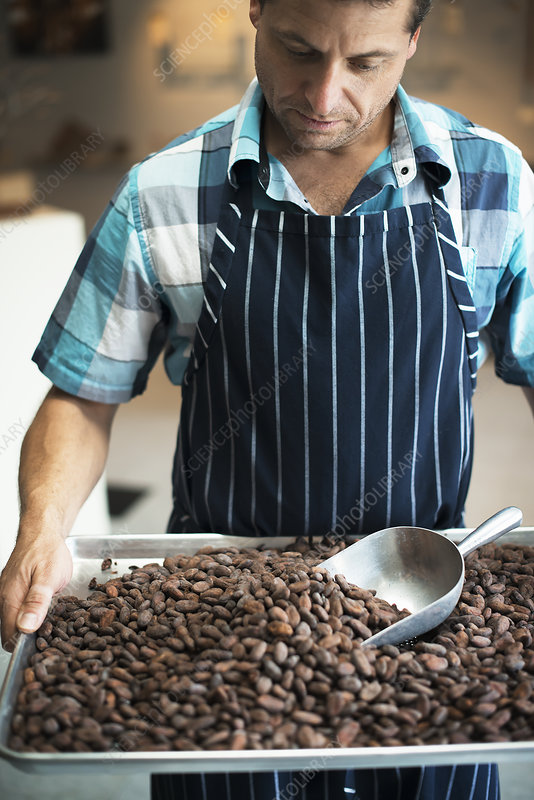 A chocolatier with a tray of cocoa beans