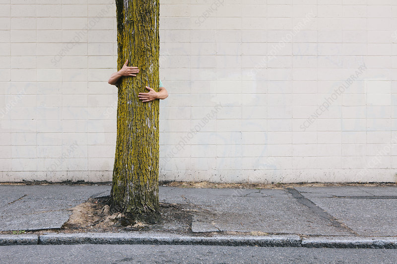 Man hugging tree on urban sidewalk