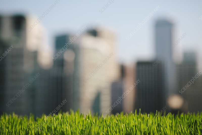 Green grass in the city