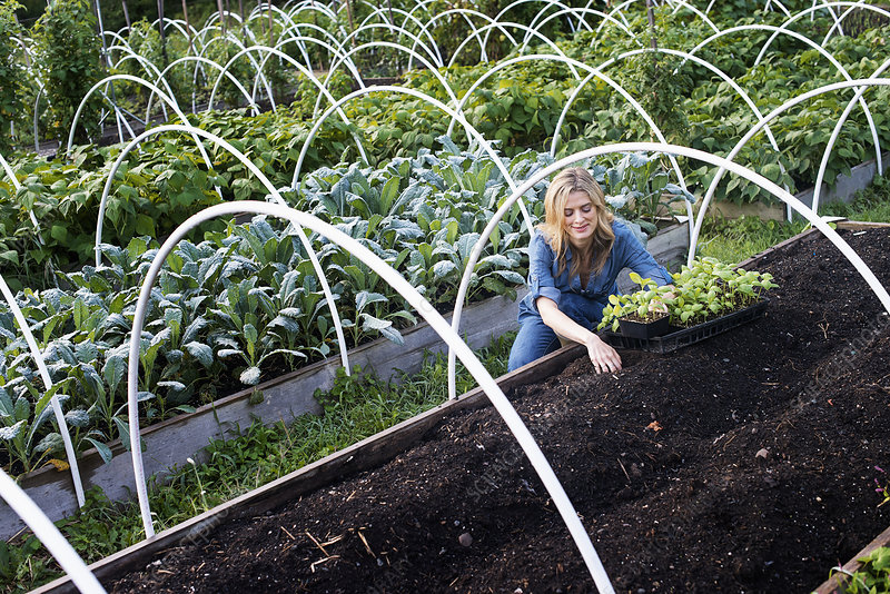 Woman in Organic Vegetable Garden