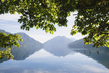 Lake Crescent and Big Leaf maple tree