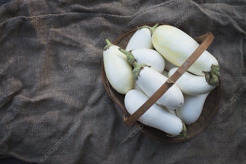 Organic White Eggplants harvested